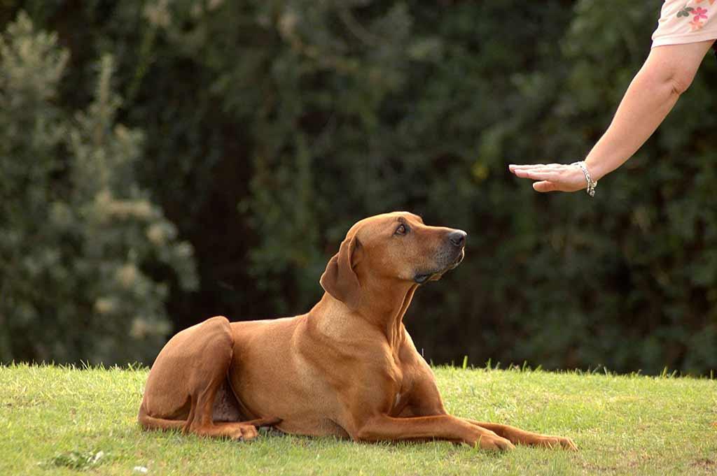 Woodlands dog training specialists