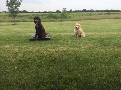 puppy training in Houston Cypress Woodlands Spring