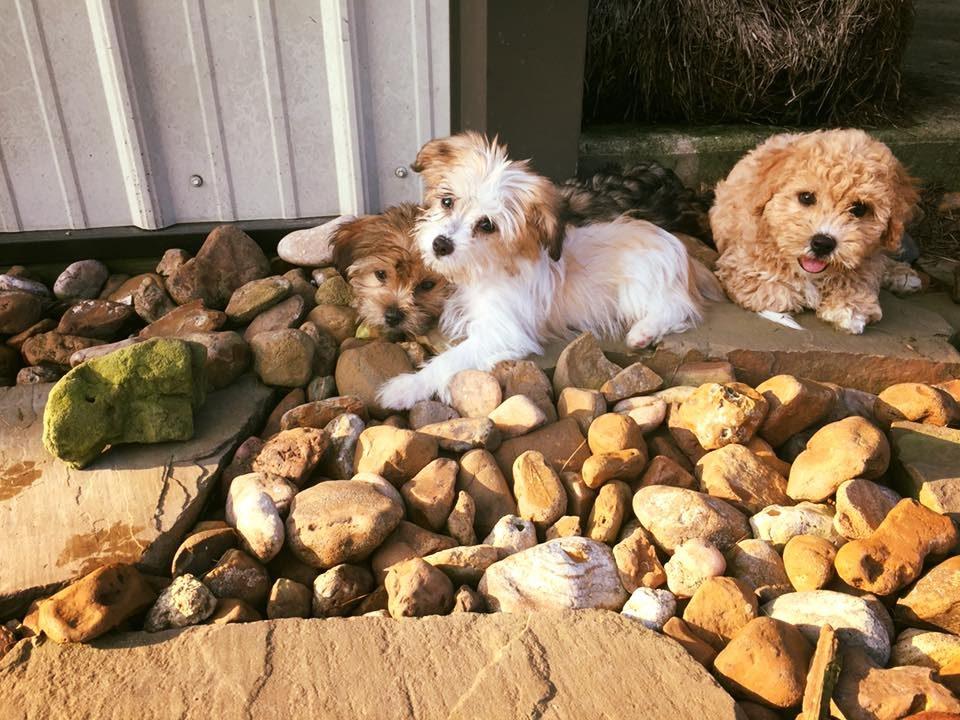 puppies1-e1512404413235