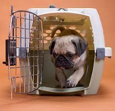puppy crate training houston tx